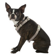 Top Paw Taupe &amp; Plum Nylon Adjustable Dog Harness