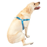 Coastal Pet Products Comfort Wrap Personalized Adj