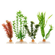 Foxtail, Cabomba, Corkscrew Val and Green Bacopa A