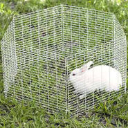 All Living Things Small Animal Playpens