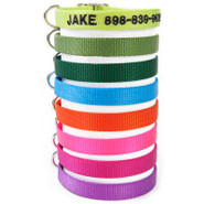 Coastal Pet Products Personalized Nylon Buckle Col