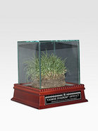 Freeze-Dried Grass from the Original Yankee Stadiu
