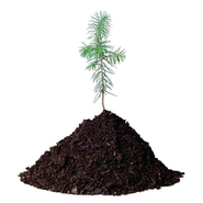 Dell Dell Plant a Tree for Me - Offset a Desktop (